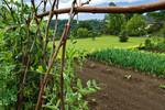 Jardin potager au Pays basque