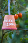 Tomate cerise Sweet Love