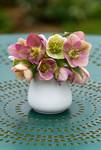 Bouquet de fleurs dHellébore au printemps